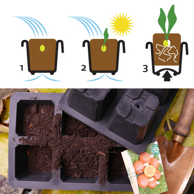 Seed Tray XL